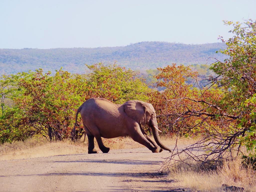 elephant qui s'etire
